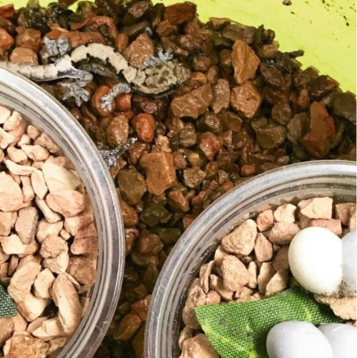 The Ultimate Mourning Gecko Care Guide - Mourning Gecko Substrate Options
