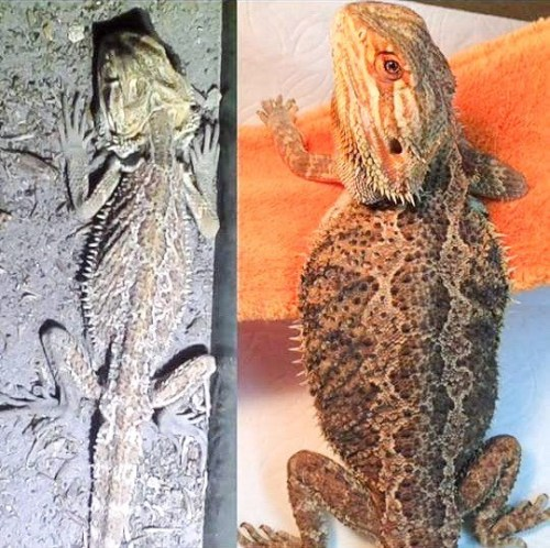 Do You Have What it Takes to Do Reptile Rescue? | ReptiFiles