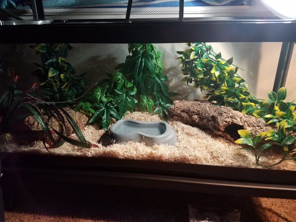 Corn Snake Accessories Decorating Your Corn Snake S Terrarium