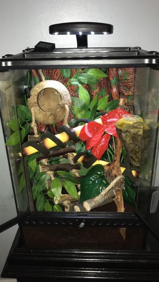 Crested Gecko Decorations For Your Terrarium Reptifiles