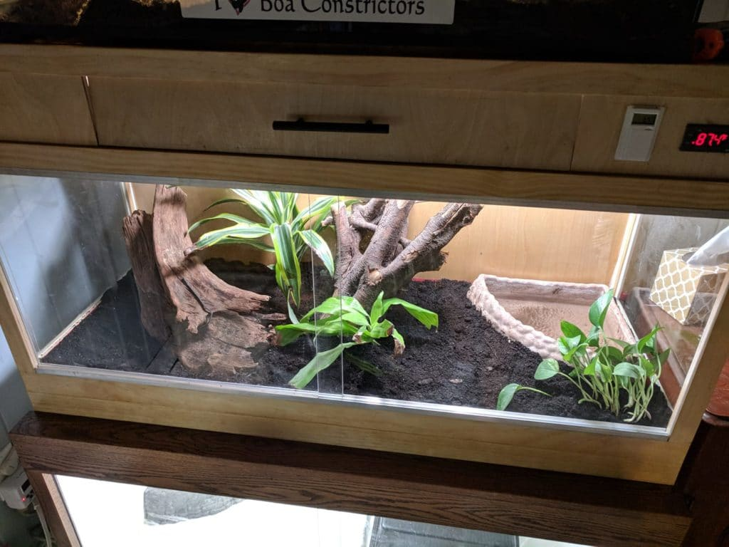 How to Decorate Your Boa Constrictor Terrarium | ReptiFiles
