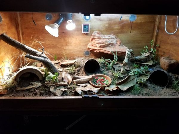 On Bearded Dragon Decorations Roommates Reptifiles