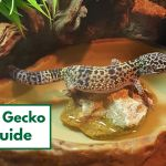 How To Set Up A Leopard Gecko Habitat Step By Step Beginner S Guide