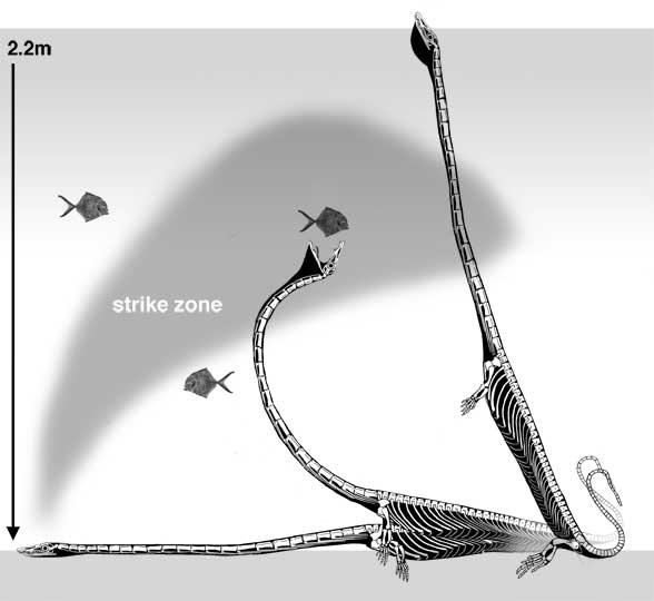 Dinocephalosaurus underwater feeding and breathing