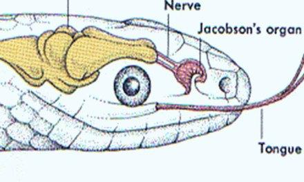 How Do Snakes Smell?