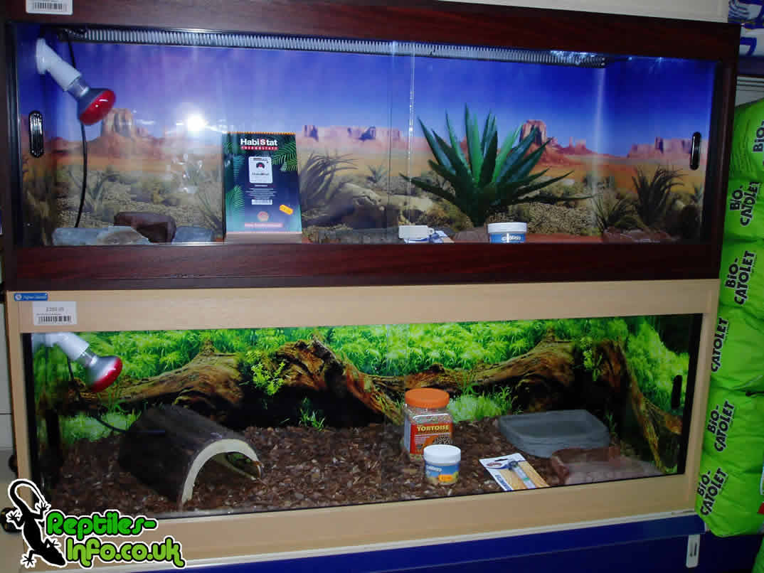 Leopard Tortoise Housing