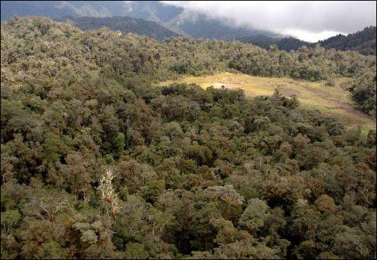 Foresta del monte Foja, Nuova Guinea
