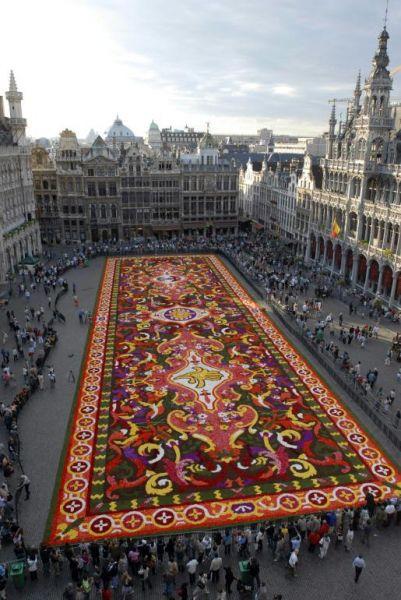 {B}Bruxelles, il tappeto di begonie copre la Grand Place{/B}
