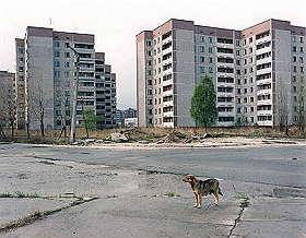 <B>Chernobyl tra lupi e rondini albine<br>21 anni dopo, la natura senza l'uomo</B>