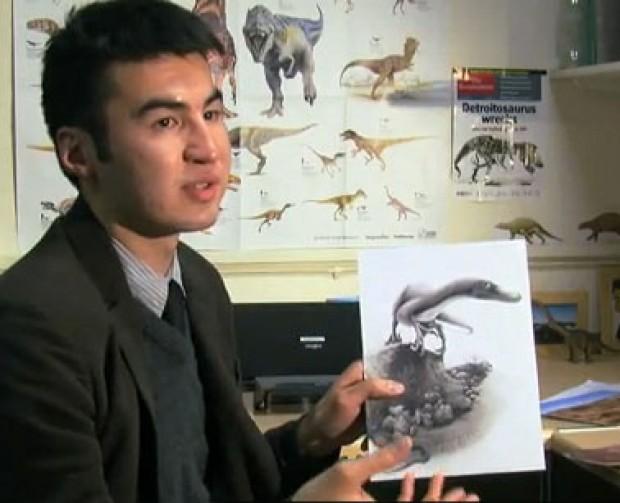 Scoperto dinosauro 'cugino' del Velociraptor