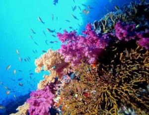 Censimento della vita sulla terra otto specie su dieci da scoprire