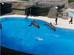 """Gardaland, i delfini vanno in pensione. Svolta animalista: """"Il parco deve cambiare"""""""