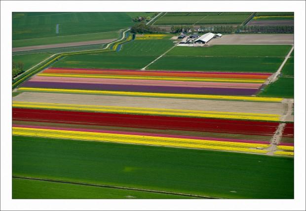 Olanda, i mosaici dei campi di tulipani ripresi dall'aereo