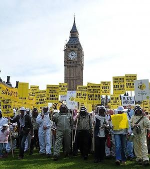 Ok della Ue alla norma salva-api Stop di due anni ai pesticidi killer