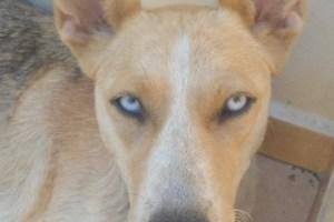 Partner:  Ghost Dogs of Aspropyrgos