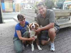 Gussie, another Greek dog re-homed in Canada by Cause 4 Paws, was originally found living in a swamp.