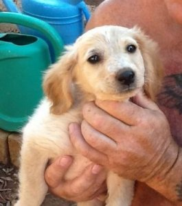 One of the Lucky 7 puppies, co-sponsored by Rescue Diva and an anonymous donor, in the loving hands of Keith Preston. Photo by Julia Preston