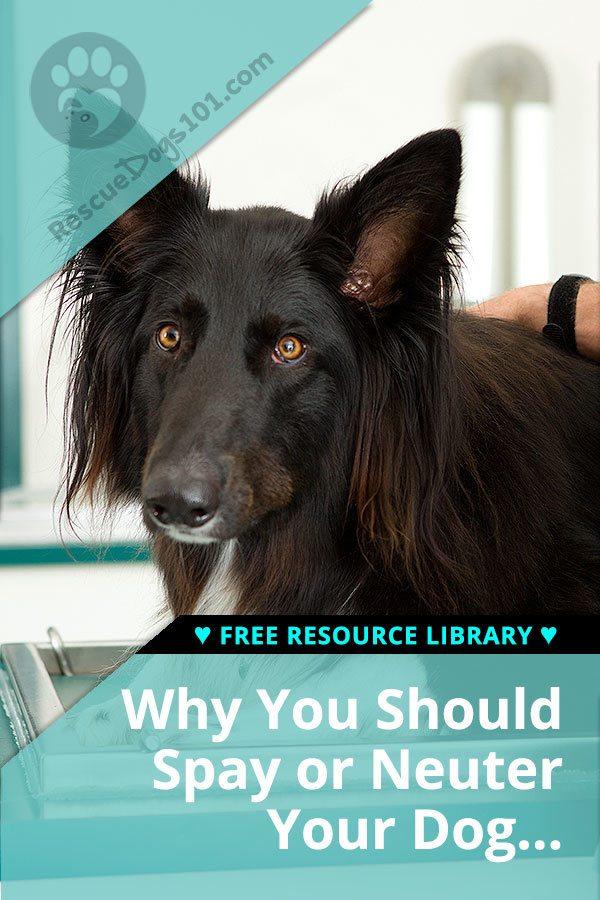 ¿Por qué debería esterilizar o castrar a su perro?