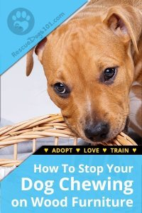 How To Stop a Dog From Chewing on Wood