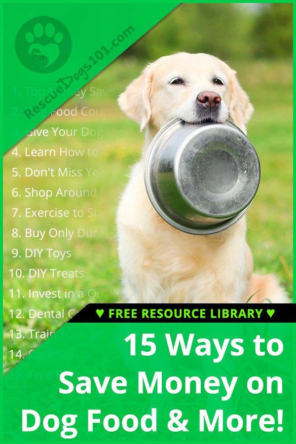 15 maneras fáciles de ahorrar dinero en su perro