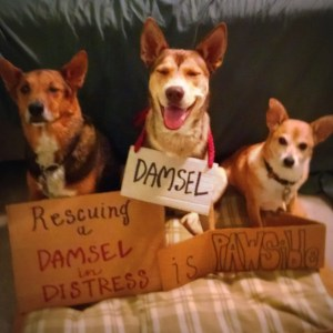 Chance and Parker's PAWSibility #86 - Rescuing a Damsel in Distress