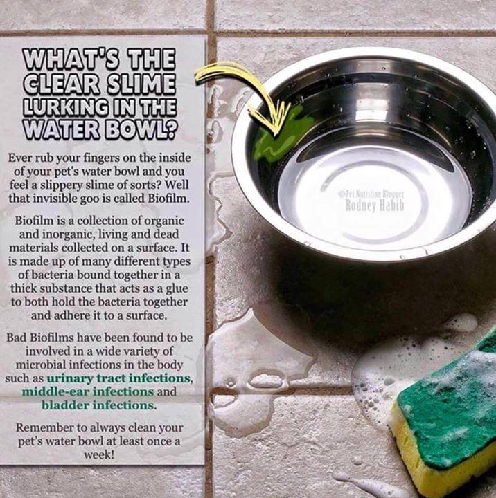 Water Bowl Slime?