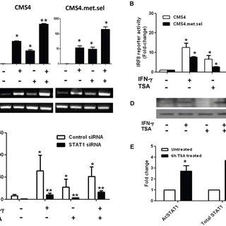 (PDF) Interferon Regulatory Factor-8 Is Important for