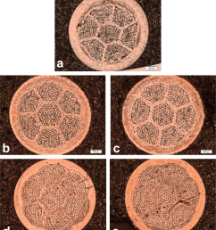 optical micrographs from etched cross sections of wires after pmp download scientific diagram [ 850 x 971 Pixel ]