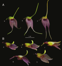 intraespecific variation of floral morphology in different specimens download scientific diagram [ 850 x 964 Pixel ]