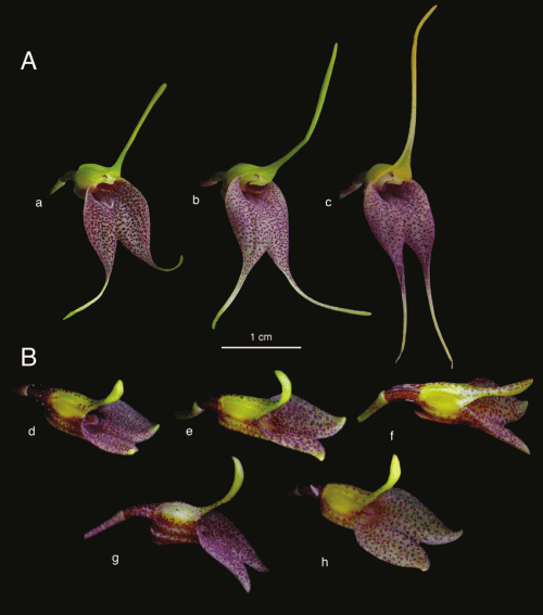 small resolution of intraespecific variation of floral morphology in different specimens download scientific diagram