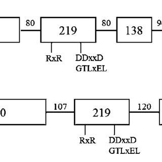 (PDF) Genomic characterization, molecular cloning and
