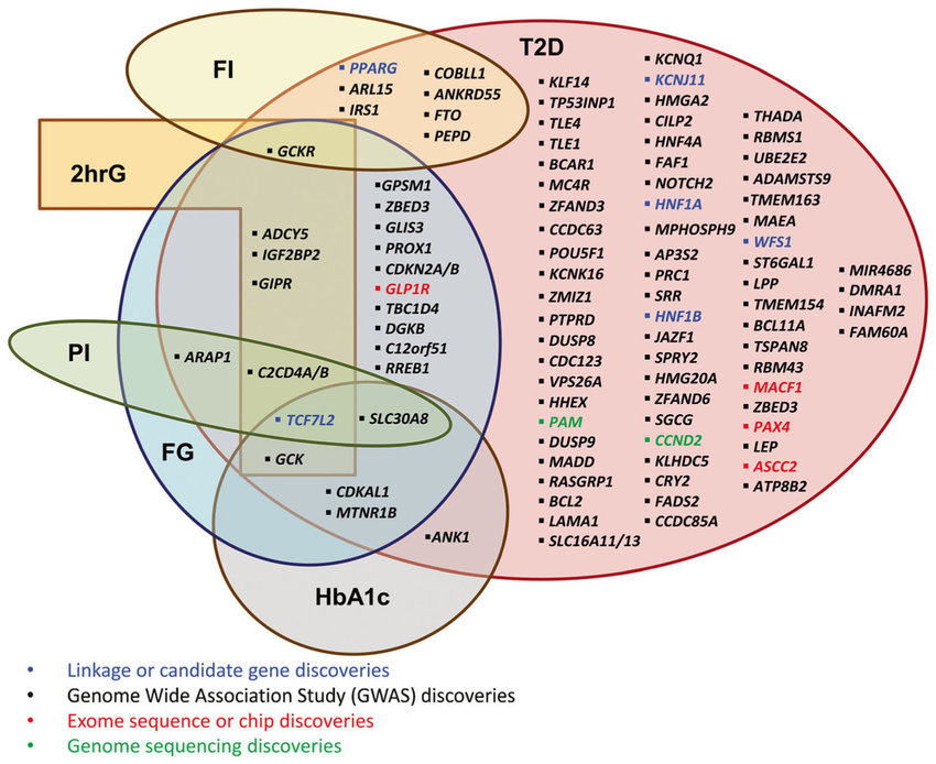 venn diagram type 1 and 2 diabetes lab tree the contains loci significantly p 5 10 8 associated with t2d published before september 2016