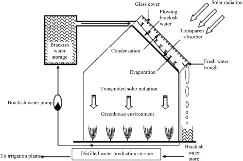 A water desalination system integrated into a greenhouse