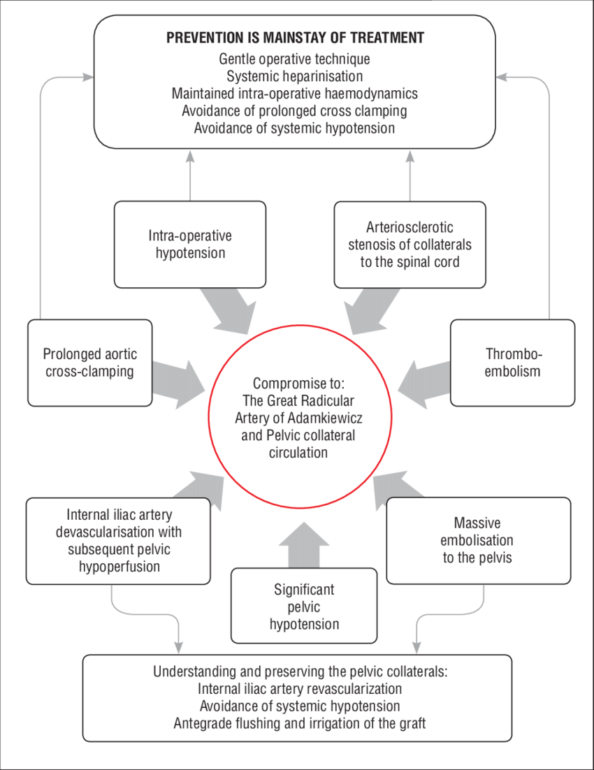 medium resolution of summary flow chart showing the mechanisms and prevention of ischaemic injury to the spinal cord