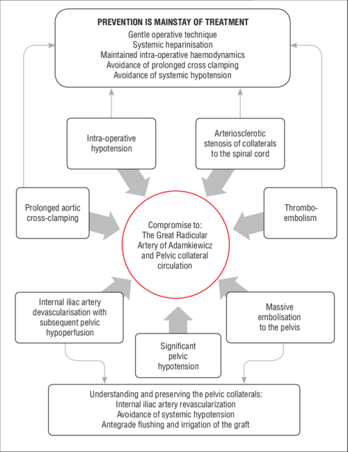 small resolution of summary flow chart showing the mechanisms and prevention of ischaemic injury to the spinal cord