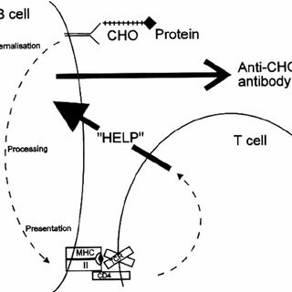 Schematic diagram of mechanism of action of PS-protein