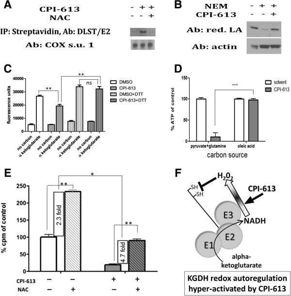 CPI-613 induces reactive oxygen species-mediated