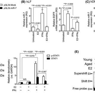 Inflammatory regulators are increased in aging fibroblasts