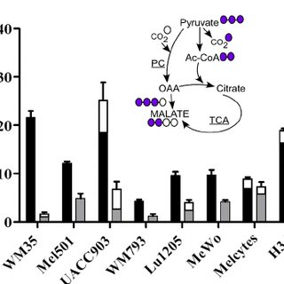 Comparative 13 C-labeling from glucose or glutamine in