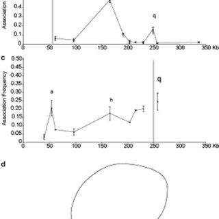 Fig. 1. 3C procedure. Schematic representation of a 3C