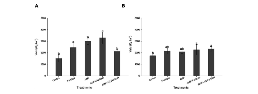 Effect of AMF inoculation on grain yield of soybean BRS