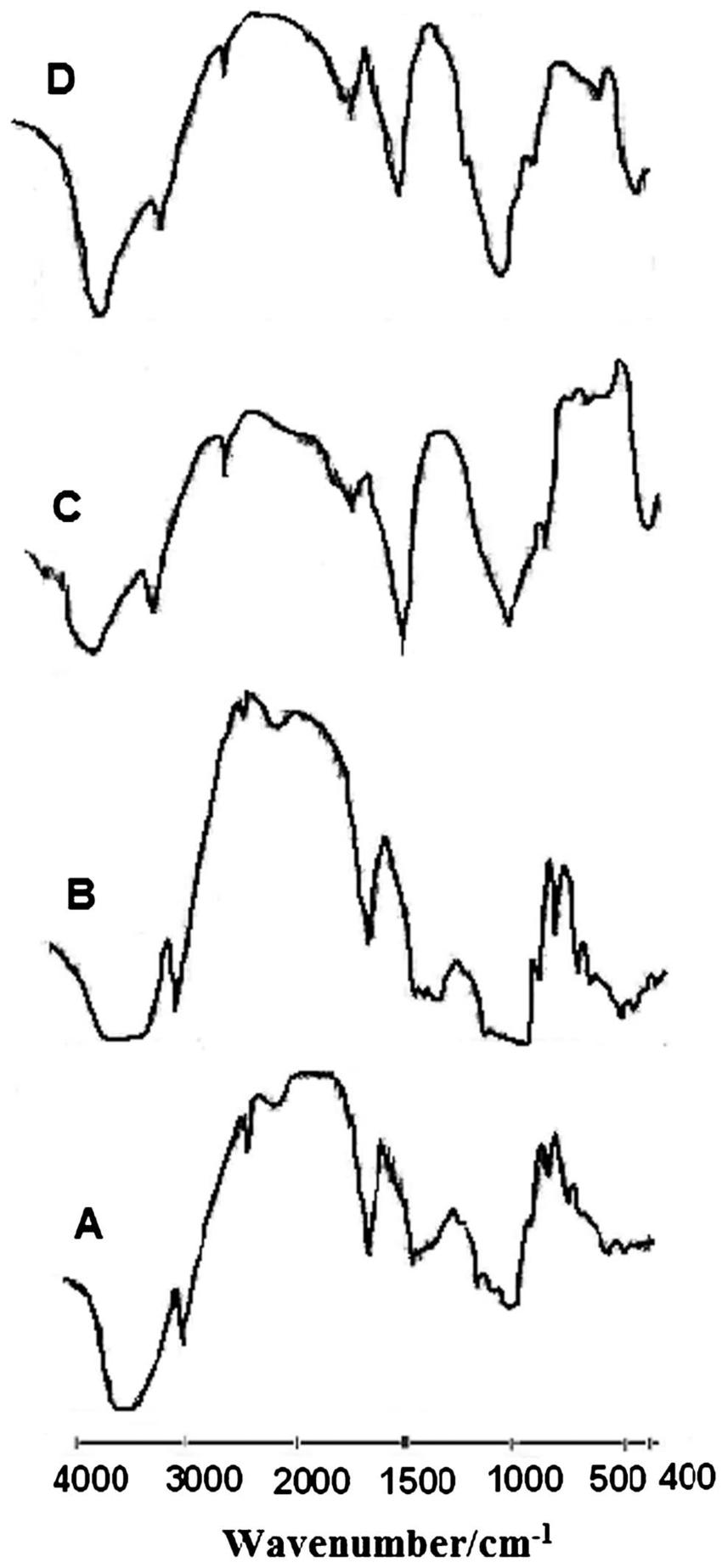 FTIR spectra of amylose (A), amylopectin (B), and their