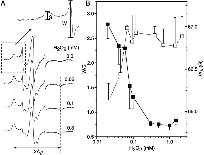 A, Electron paramagnetic resonance (EPR) spectra of 5-MSL
