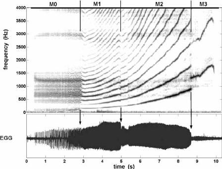 Illustration of the four laryngeal vibratory mechanisms on