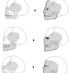 a schematic reconstruction of the modelling methods as indicated by the skulls from jericho top [ 850 x 1033 Pixel ]