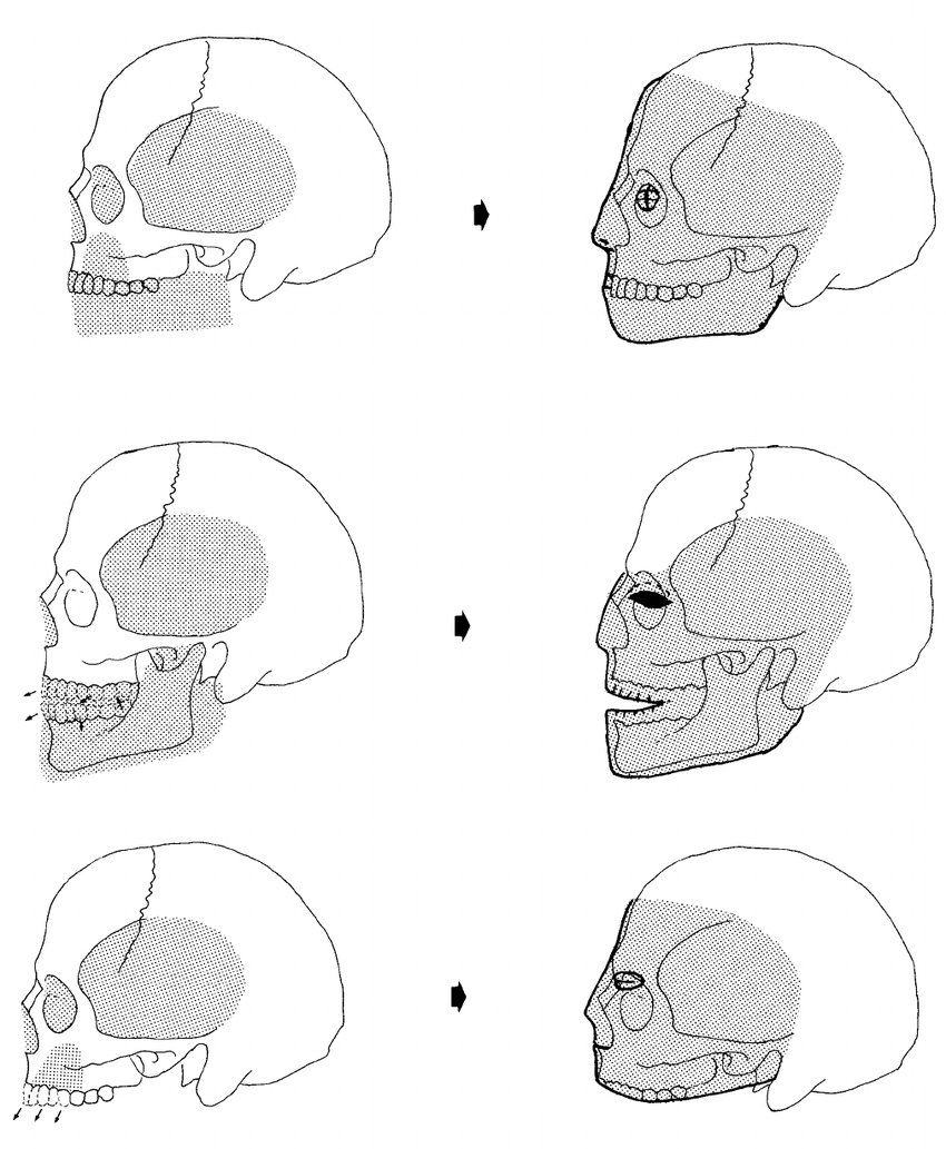 medium resolution of a schematic reconstruction of the modelling methods as indicated by the skulls from jericho top