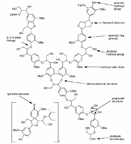 Recent lignin model proposed by Brunow and coworkers. 7