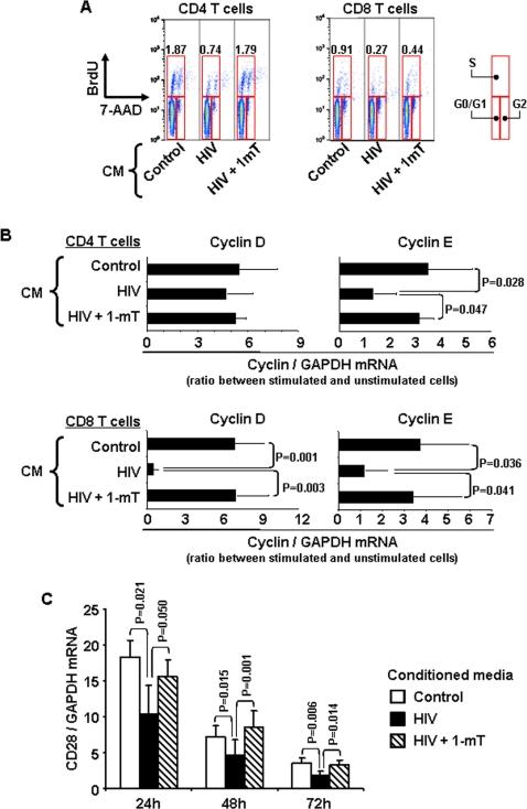 (A) Flow cytometry dot plots showing BrdU incorporation
