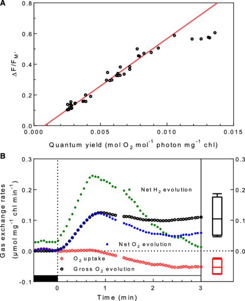 small resolution of combined measurements of gas exchange and chlorophyll fluorescence show download scientific diagram