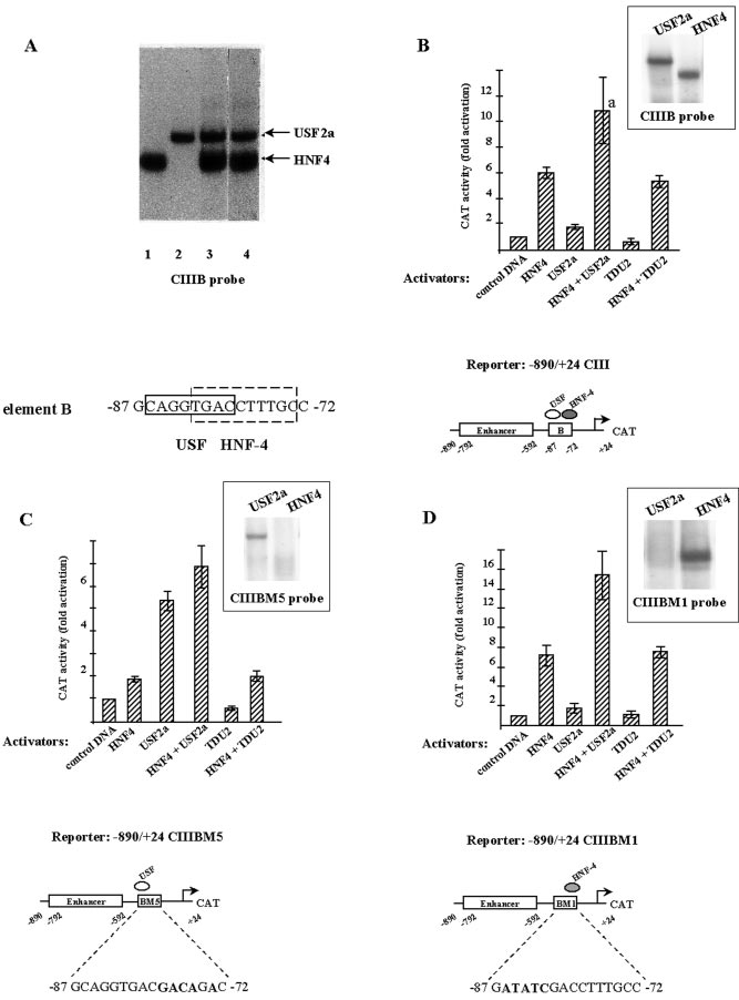 FIG. 1. USF2a and HNF-4 transactivate the human apoC-III